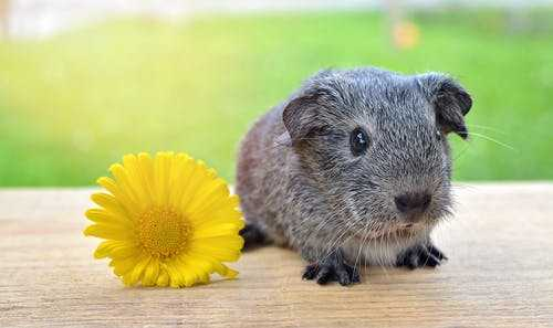 Small Pets With Low Maintenance For Kids