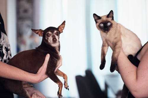 Furry Small Animals Adoption