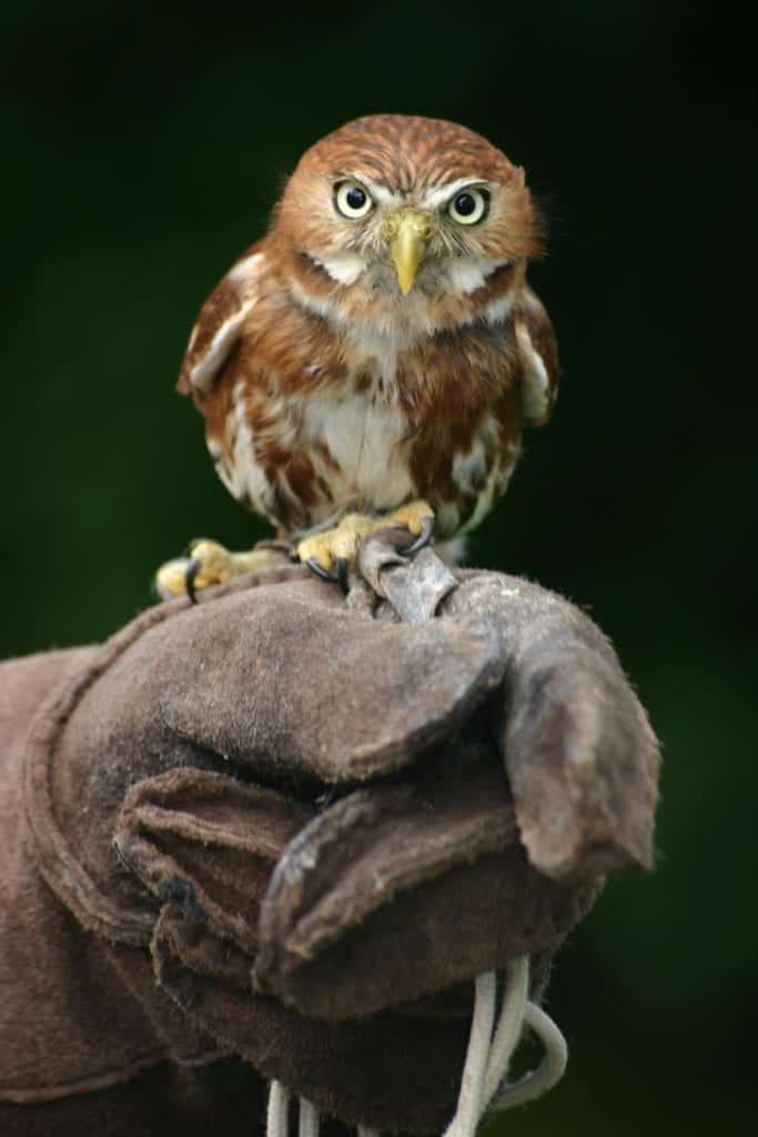 Small Animals With Big Eyes: Incredible Eyes