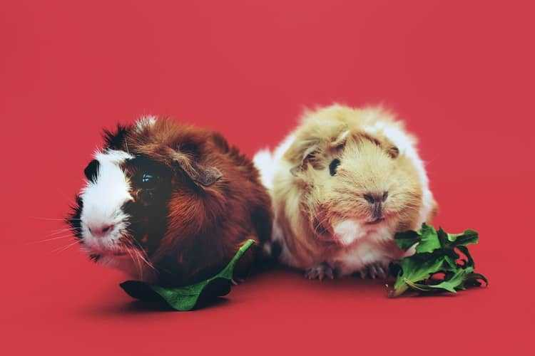 Why Pick Small Animals to Adopt - Here Are Some Cute Reasons