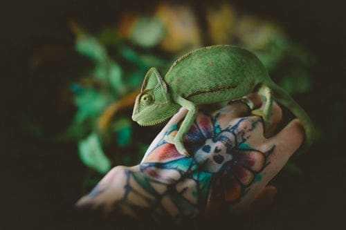 Small Animals Tattoo-Some Cute Designs