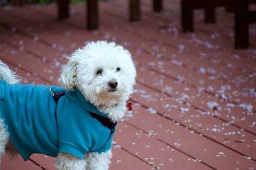 Dog Jacket: The Answer To Warm Weather