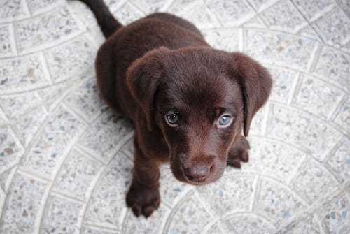 Perfect Pet Animals: Three Tips For Taking Care