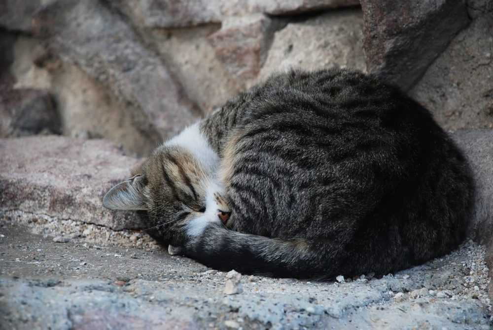 A cat lying on top of a rock