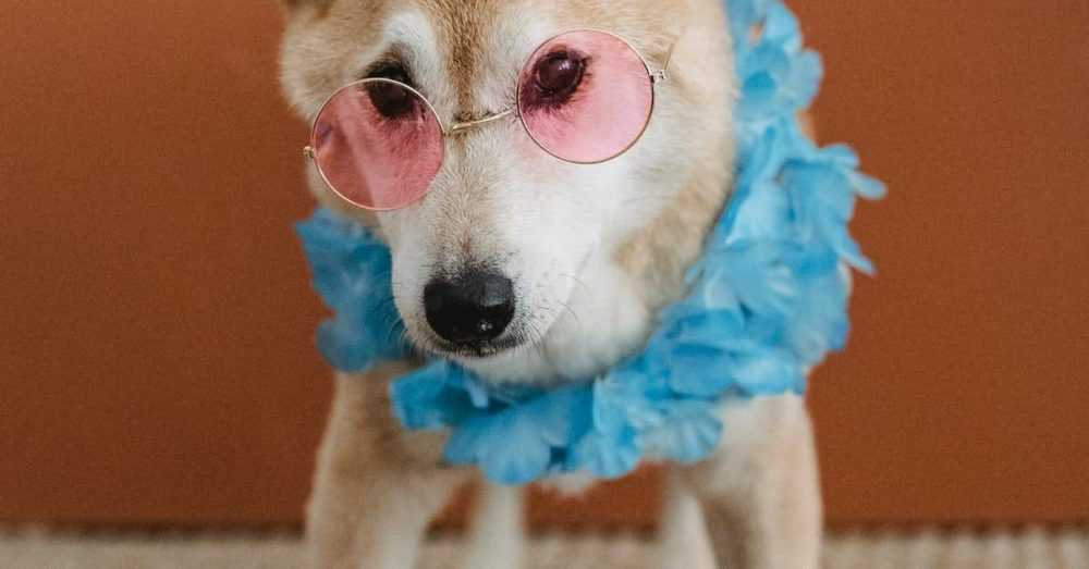 Pet Animal Insurance
