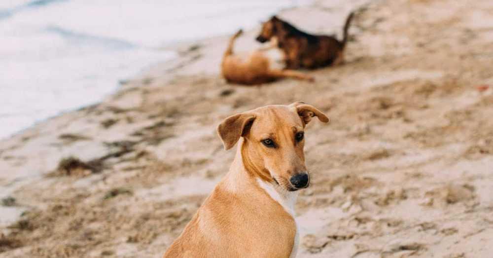 A dog sitting on top of a sandy beach