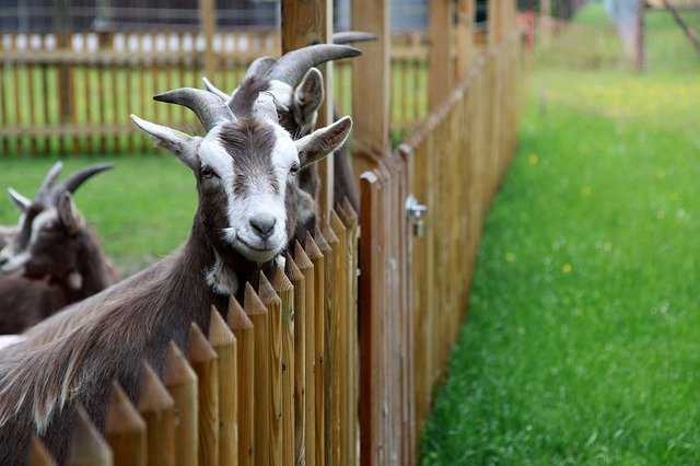 pet world animal shelter