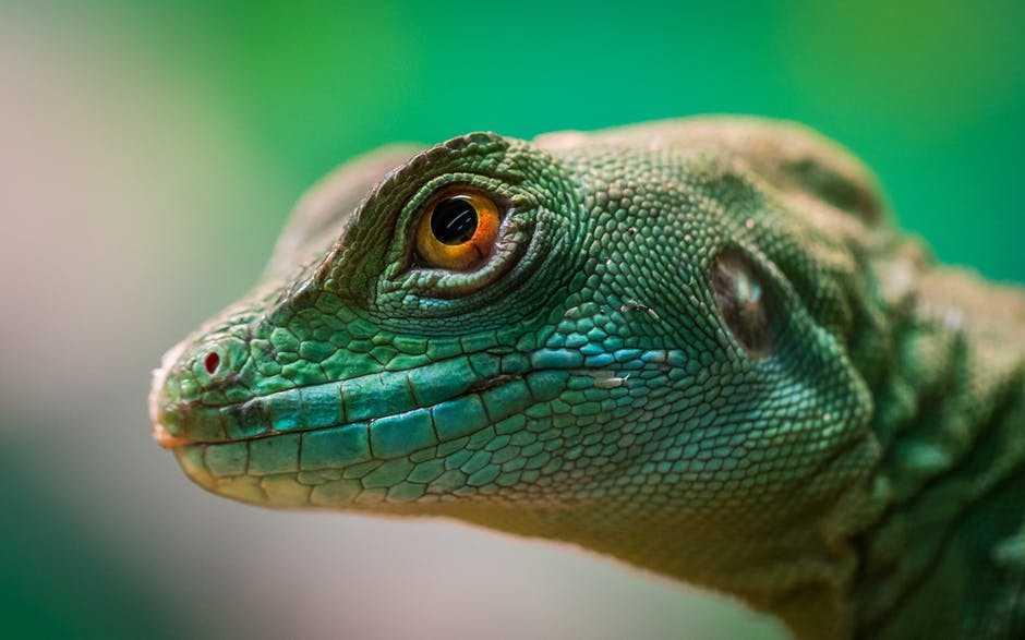 A close up of a lizard