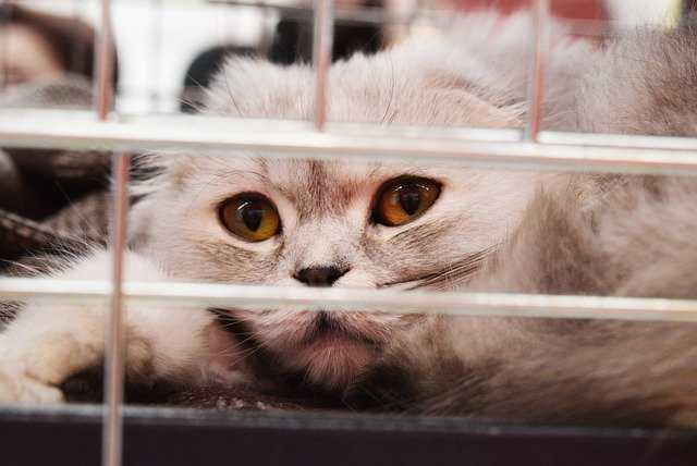 miami dade animal shelters adoption