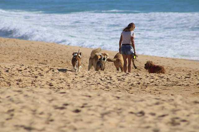 A dog walking on a sandy beach