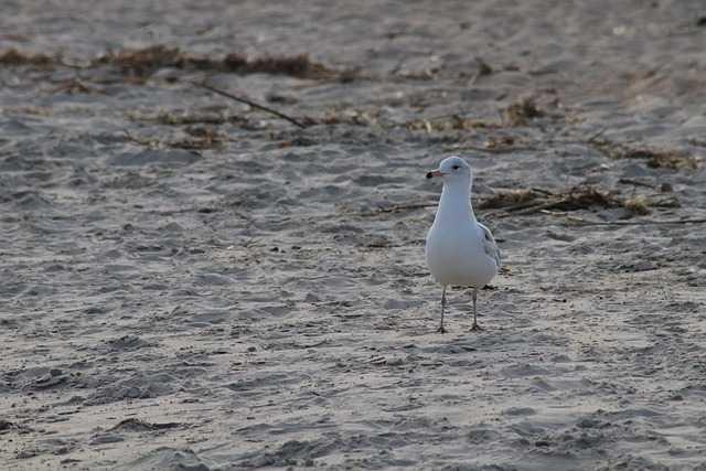 A bird standing on top of a sandy beach