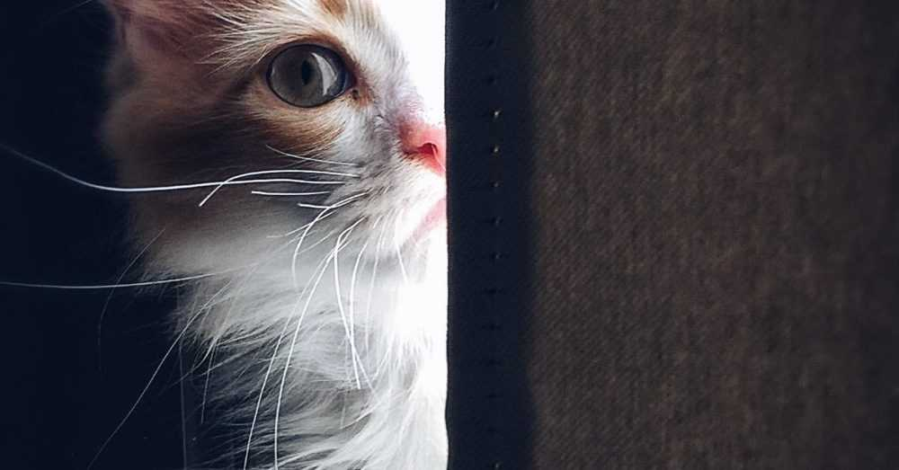 A close up of a cat with its mouth open