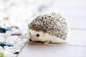A close up of a hedgehog