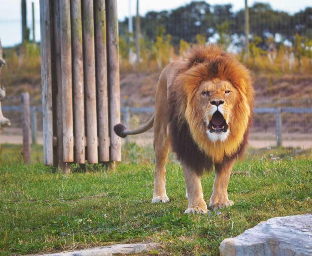 An animal standing on grass