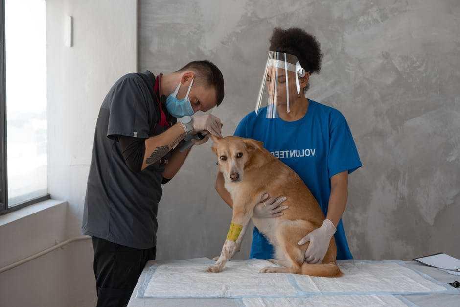 pet care animal hospital