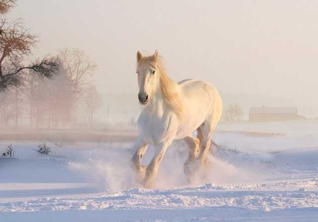 A horse is standing in the snow