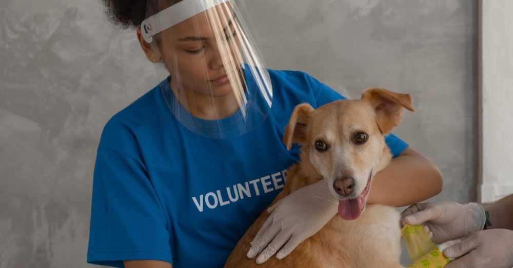 broward county animal adoption
