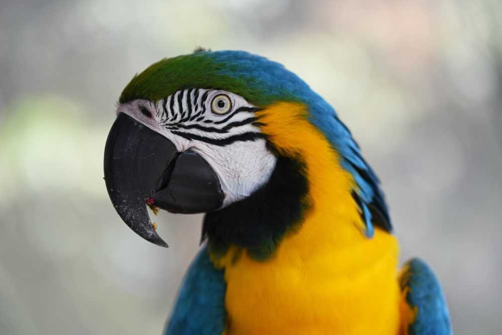 A colorful bird perched on top of a parrot