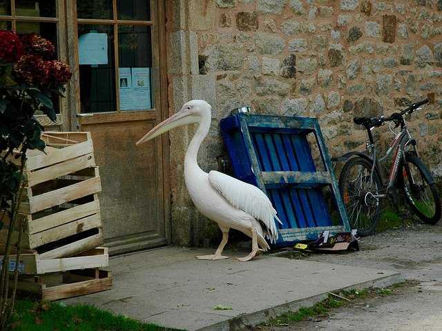 A bird sitting on a bench in front of a building