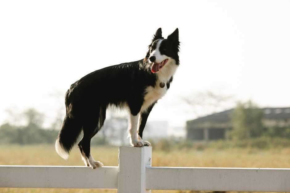 A dog standing next to a fence