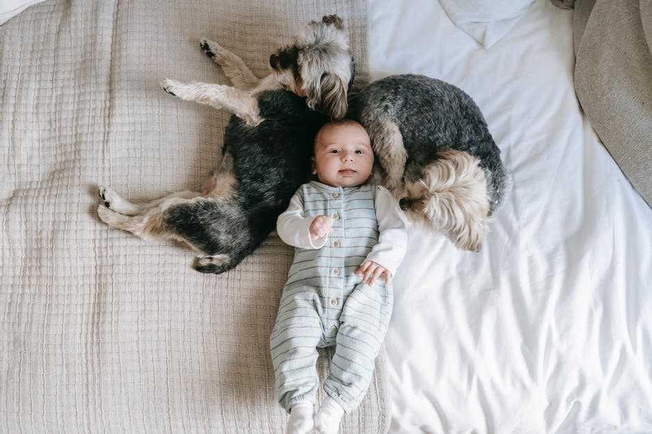 A dog holding a stuffed animal